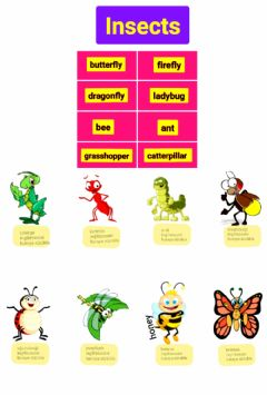 Interactive worksheet G5. Insects