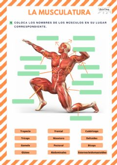Interactive worksheet La musculatura