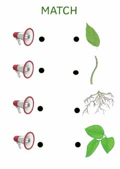 Interactive worksheet Parts of a plant, listen and match