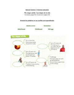 Interactive worksheet Stages of Life