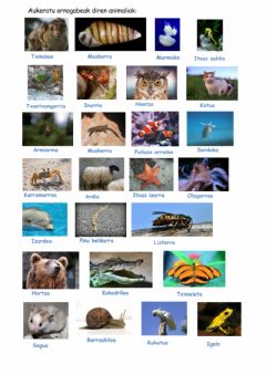 Interactive worksheet Animalia ornogabeak