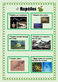 Interactive worksheet Reptiles