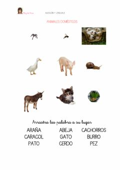 Interactive worksheet Animales domesticos