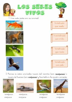 Interactive worksheet Los seres vivos