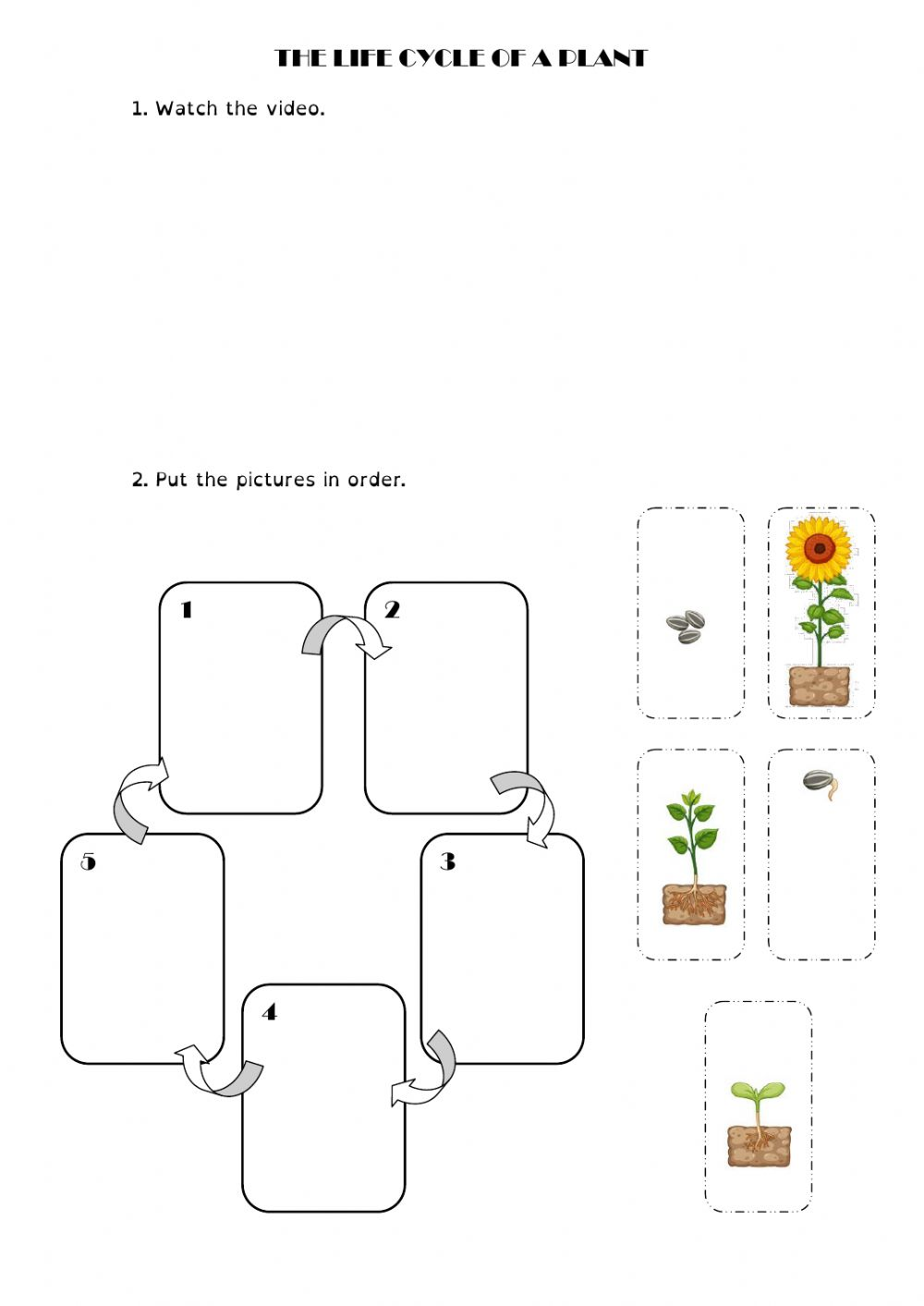 Life cycle of a plant interactive worksheet