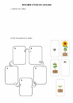 Interactive worksheet Life cycle of a plant