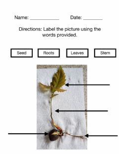 Interactive worksheet Label the Plant