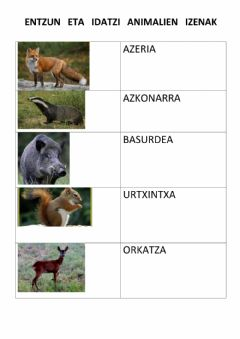 Interactive worksheet Basoko animaliak