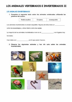 Interactive worksheet Los animales invertebrados