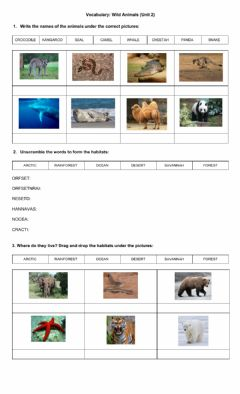 Ficha interactiva Wild Animal Habitats