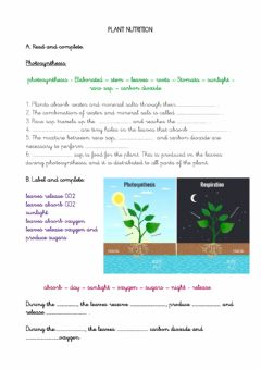 Ficha interactiva Plant nutrition and respiration