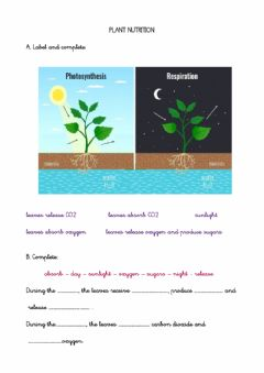 Interactive worksheet Plant nutrition and respiration adapted