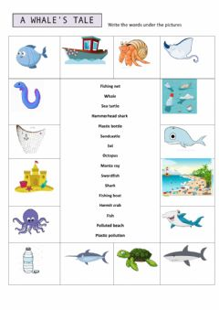 Interactive worksheet A whale's tale
