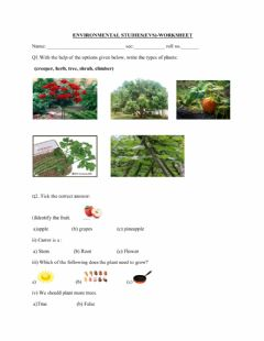 Interactive worksheet Plants around us