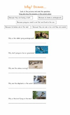 Interactive worksheet Why? Because - animals