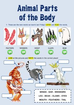 Interactive worksheet Animal Parts of the Body II