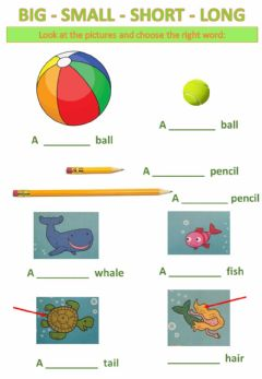 Interactive worksheet Big small short long