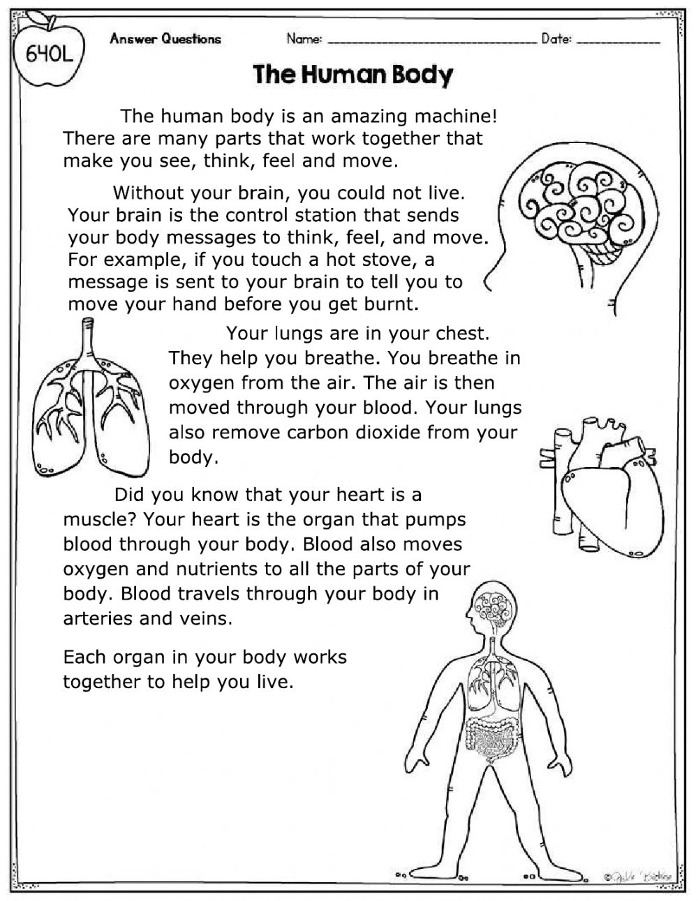 The Human Body RC - Interactive worksheet
