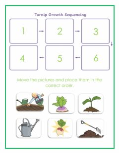 Interactive worksheet Growth Sequence - The Enormous Turnip