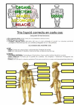 Interactive worksheet Ossos