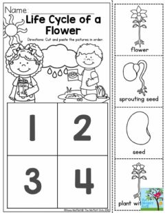 Interactive worksheet Life cycle of plant