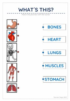 Interactive worksheet Organs and names