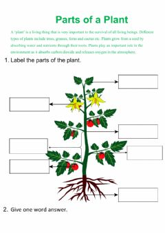 Interactive worksheet Parts of Plant