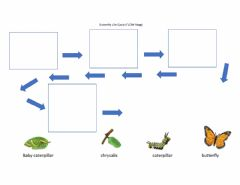 Ficha interactiva Butterfly flow map