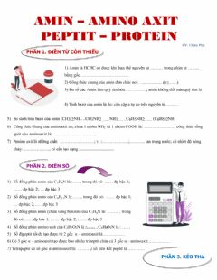 Interactive worksheet Amin Aminoaxit Peptit Protein