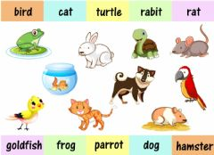 Interactive worksheet Pets
