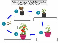 Ficha interactiva Stages Of A Plant's Growth