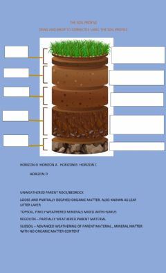 Interactive worksheet The soil profile