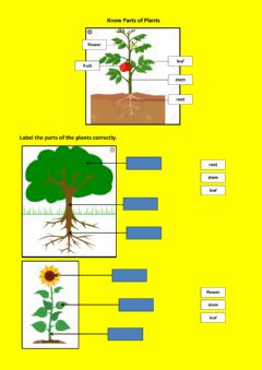 Interactive worksheet Know parts of plants