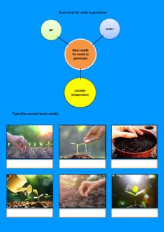 Ficha interactiva Basic needs for seeds to germinate