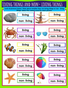 Interactive worksheet Living things and non- living things