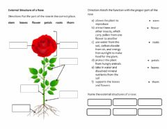 Interactive worksheet External Structures of a Rose