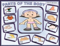 Ficha interactiva Parts of the body