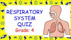 Interactive worksheet Respiratory System quiz
