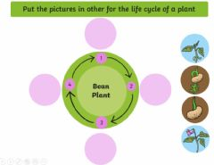 Interactive worksheet Lifecycle of a plant
