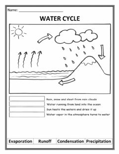 Ficha interactiva Water Cycle