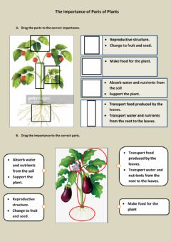 Interactive worksheet The importancw of parts of plants