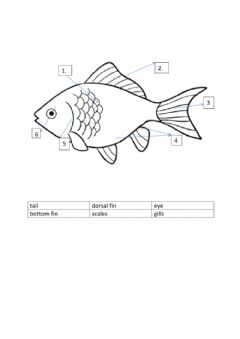 Interactive worksheet The fish
