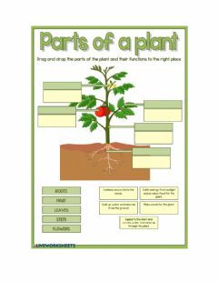 Interactive worksheet Plant parts and functions