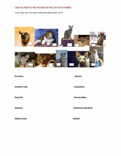 Interactive worksheet Learning about cats