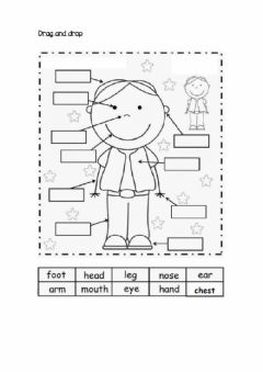 Interactive worksheet Body Parts