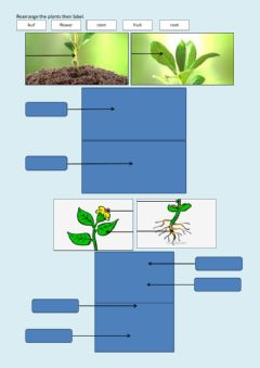 Ficha interactiva Know parts of plants