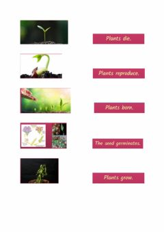 Interactive worksheet LIFE CYCLE OF PLANTS