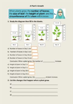 Interactive worksheet A plant's growth