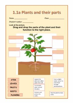 Ficha interactiva Plants and their parts