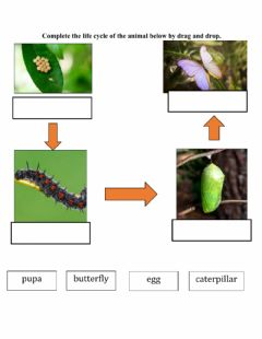 Interactive worksheet Life cycle of butterfly